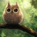 Аватар для FireOwl